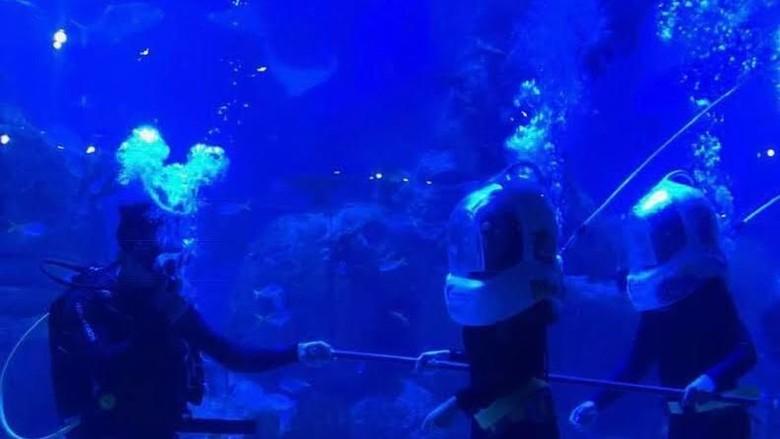 Pertunjukan Pearl of The South Sea di Jakarta Aquarium. (Foto: Dok Jakarta Aquarium)