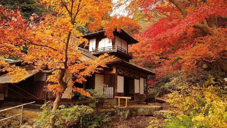 Momiji Sankelen (dok. Prefektur Kanagawa)