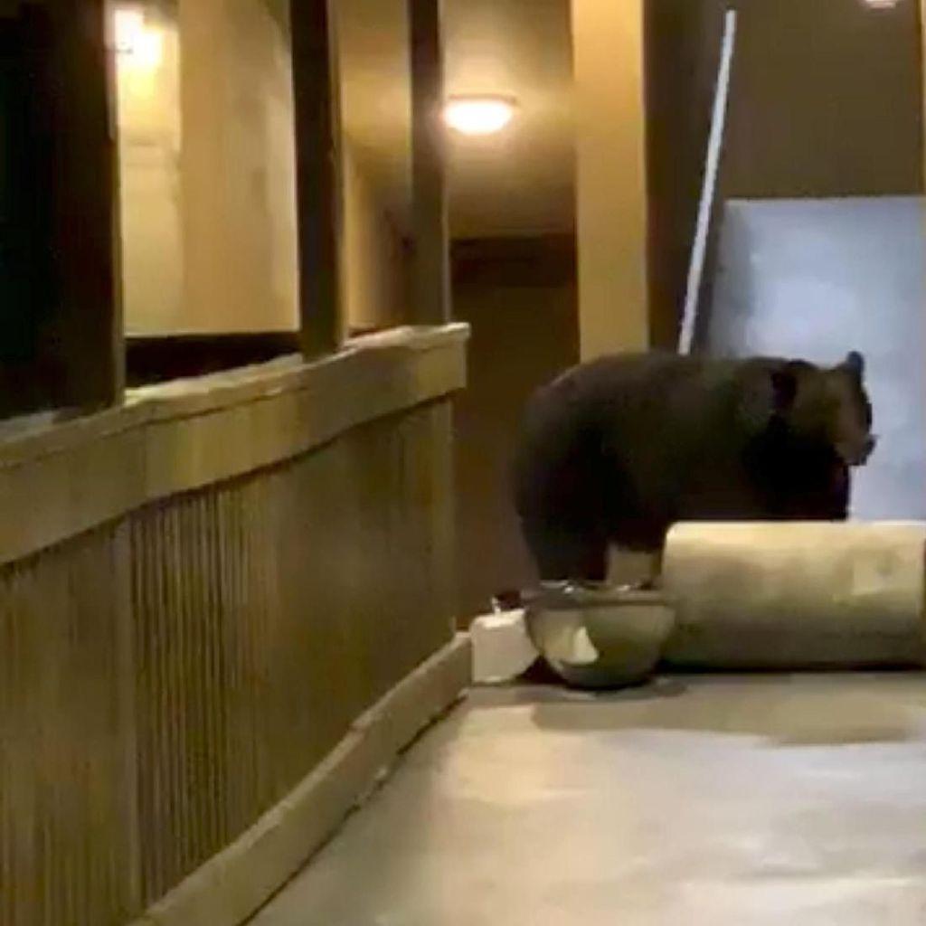 Beruang Lapar Merangsek Masuk ke Hotel di AS