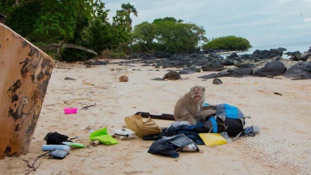 Dirampok Monyet di Pantai Bama Situbondo!