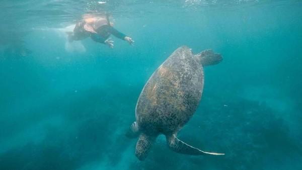 Benar-benar surga bawah laut, kamu juga bakal sering ketemu penyu (Khairul Leon/dTraveler)
