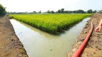 Siap Beri Bantuan, Kementan Dukung Pertanian Lahan Rawa di Papua