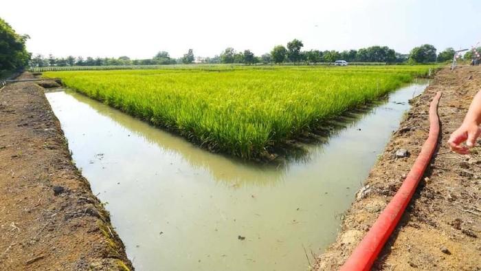 Memperingati Hari Pangan Sedunia ke-38, Menteri Pertanian Amran Sulaiman meninjau langsung salah satu lahan rawa yang ada di Kalsel.