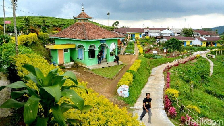 Kampung Bunga di Probolinggo (M Rofiq/detikTravel)