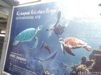 Tempat Penyelamatan Penyu di Lombok