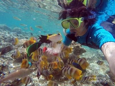 Wisata Selam Jadi Pemicu Pertumbuhan Wisman di Sulut Hingga 500%