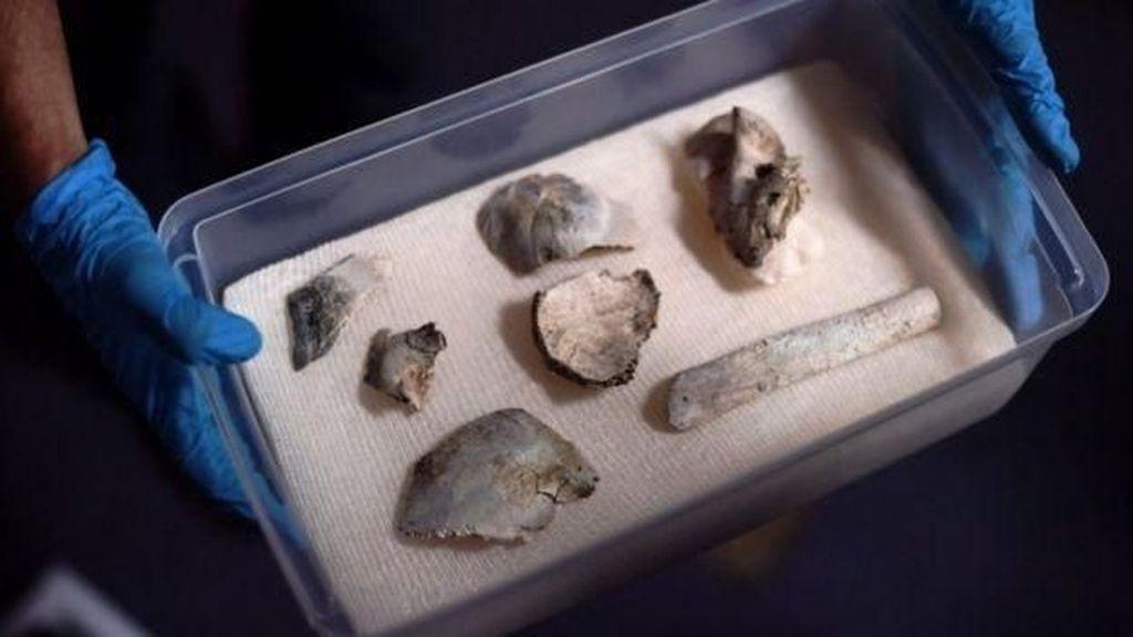 Fosil Tengkorak 12 Ribu Tahun Selamat dari Kebakaran Museum Brasil