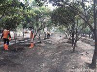 Perkebunan di TPST Bantargebang