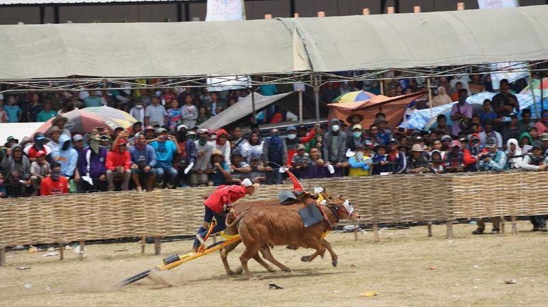 Foto: Pagelaran karapan sapi memang selalu menjadi suatu hal yang ditunggu-tunggu masyarakat Madura. Selain untuk melestarikan kebudayaan, ajang ini juga menarik wisatawan (Achmad Riza Maulana/Istimewa)