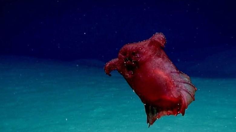 Pertama Kali Terekam Kamera Monster Ayam Tanpa Kepala di Samudera Selatan