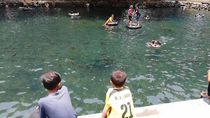 Byur! Berenang Bareng Ribuan Ikan di Pemandian Banyubiru Pasuruan