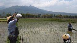 Kementan Klaim Program Pertanian Sukses, Ini Indikatornya