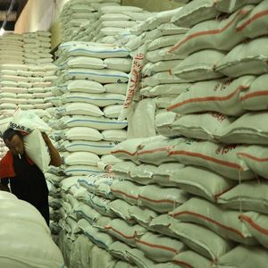 Produksi Beras Surplus, Peluang RI Lumbung Pangan Dunia Terbuka