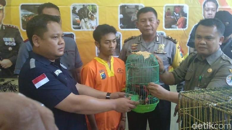 Jual Satwa Dilindungi, Warga Bojonegoro Diciduk Polisi di Lamongan