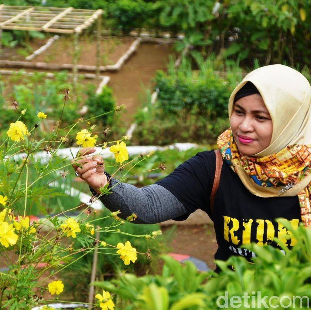 Foto: Kampung Bunga Probolinggo yang Cantik & Sejuk