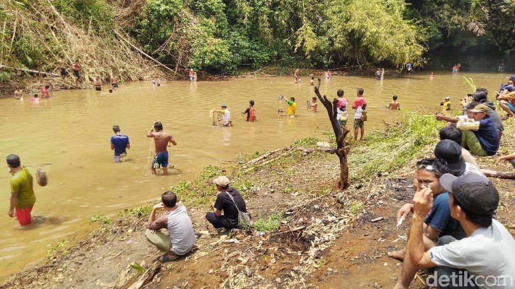 Foto: Jagoan! Tradisi Tangkap Ikan Pakai Tangan Kosong di Ciamis