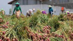 Kementan Sebut PDB Pertanian Naik Pesat, Ini Indikatornya