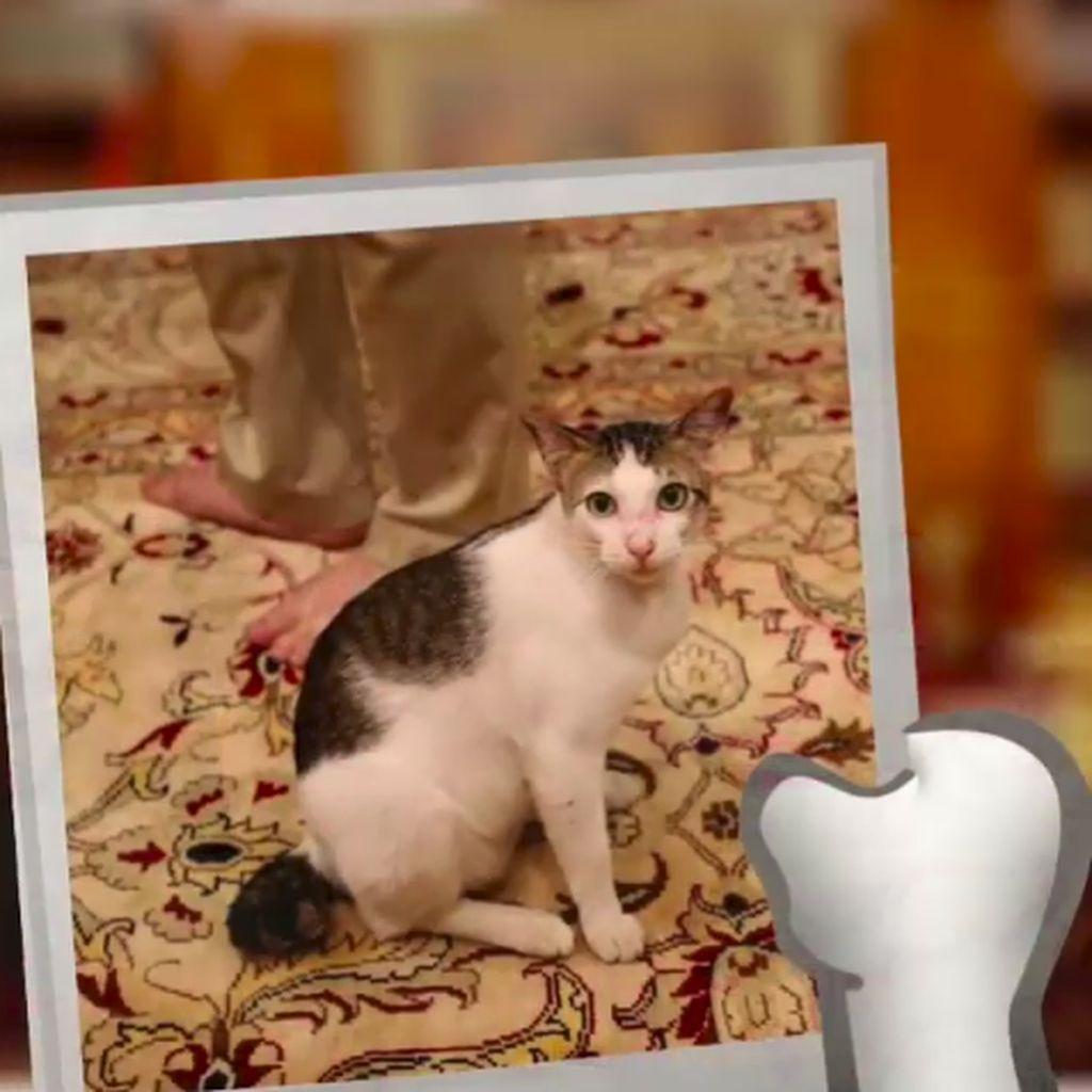 Download 97+  Gambar Kucing Umam Paling Lucu HD