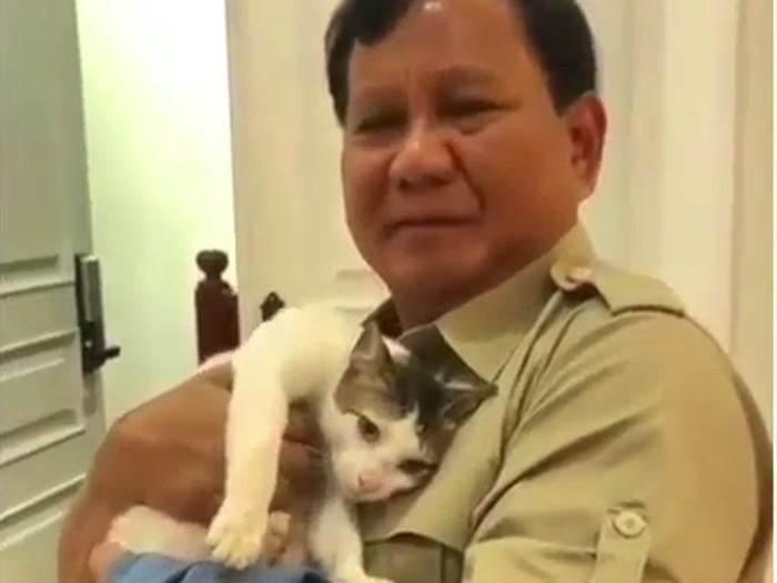 Bobby kucing kampung prabowo