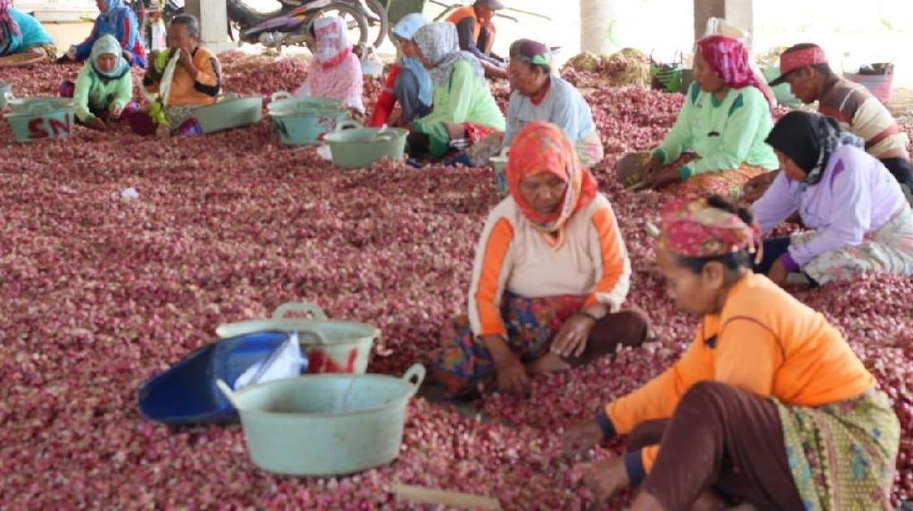 Panen Berkurang, Harga Bawang Merah Mulai Merangkak Naik