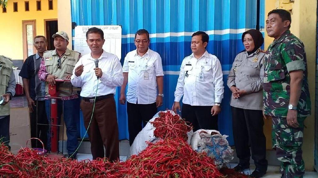 Stabilkan Harga, Kementan Buka Pasar Lelang Cabai di Tuban