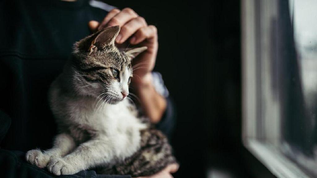 Heboh Pria Makan Kucing di Kemayoran, Kenapa Orang Makan Hewan Hidup-hidup?