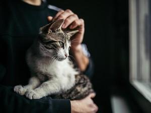 Cara Mengelus Kucing Agar Jinak, Ini 4 Bagian Tubuh yang Disukai Kucing
