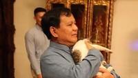 Pelanggaran! Tingkah Bobby, Kucing Prabowo yang Bikin Keki