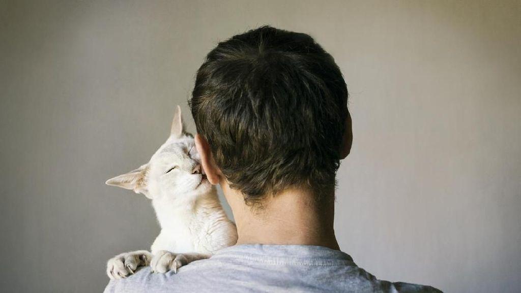 Sering Tidur Bareng Kucing Kesayangan, Ini Dampaknya