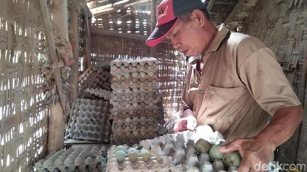 Mbah Dasar dengan telur bebek hasil kerja kerasnya.