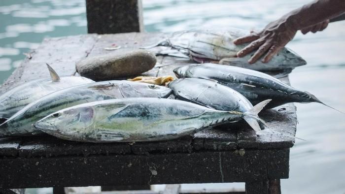 Fishmonger fileting skipjack tuna, Katsuwonus pelamis, in local fish market, Banda Neira, Maluku, Indonesia.