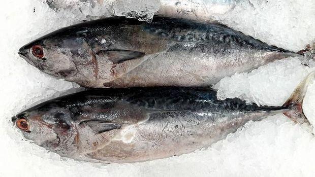 ikan laut favorit di Indonesia