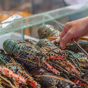 Benih Lobster Sering Diselundupkan karena Budi Dayanya Lama