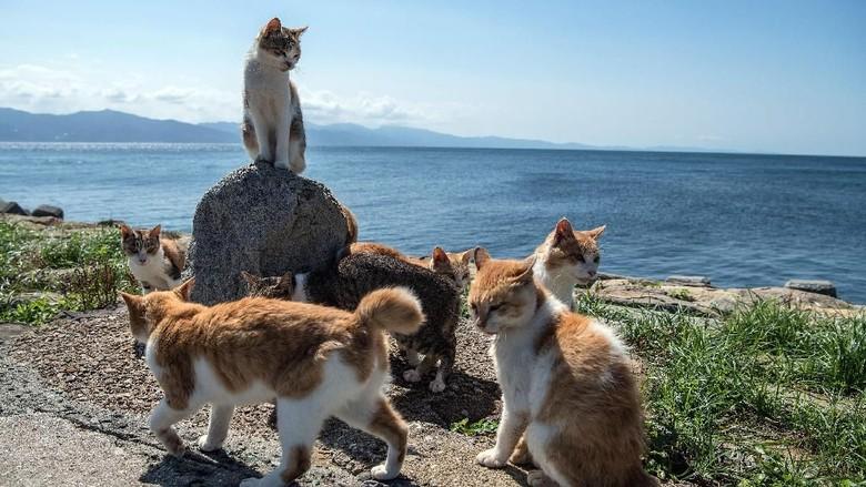 Pulau Kucing di Jepang (Carl Court/Getty Images)