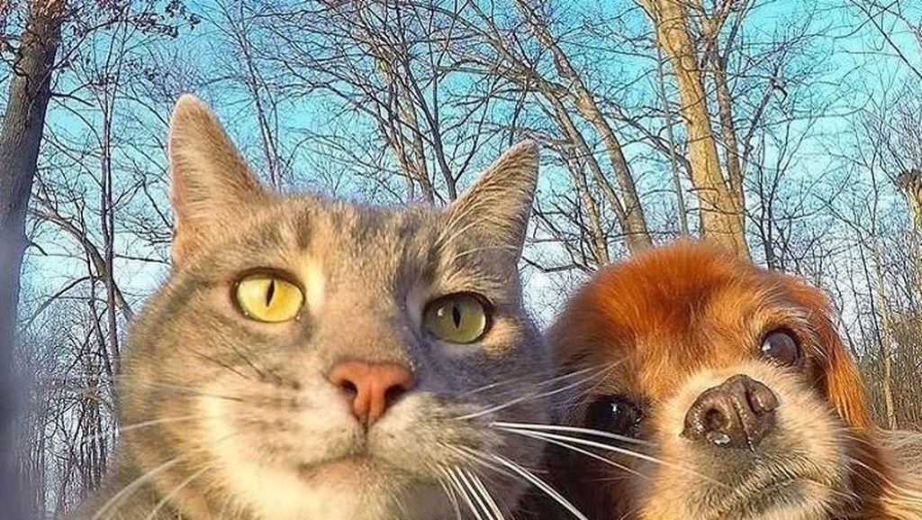 Kucing Vs Anjing, Mana Lebih Pintar?