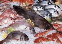 Punya 4 Manfaat, Benarkah Ikan Bisa Bantu Turunkan Berat Badan?