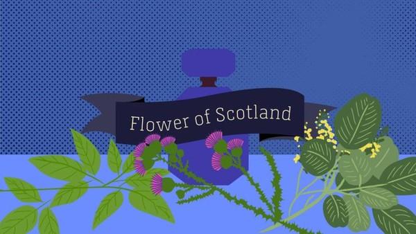 Eropa, Timur Tengah dan Afrika paling suka wewangian White Tea & Ginger. Namun aroma Flower of Scotland adalah yang paling populer kelima (Esa Matinvesi/CNN)