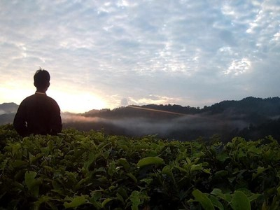 Perjalanan Mencari Jamur Menyala di Balik Kabut Halimun