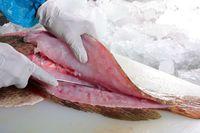 Mau Stok Ikan? Lebih Awet Kalau Simpan dengan Cara Ini