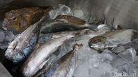 Tinggi Protein Ikan Gabus Bisa Percepat Penyembuhan Luka Pasca Operasi
