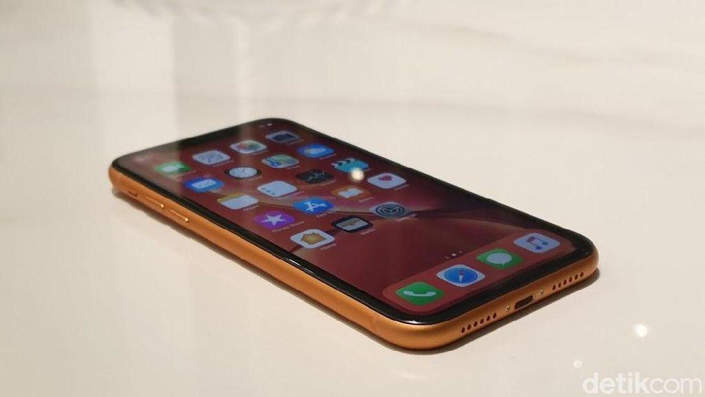 Trio iPhone baru akan segera dirilis secara resmi di Indonesia, salah satunya iPhone XR. (Foto: Adi Fida Rahman/detikINET)