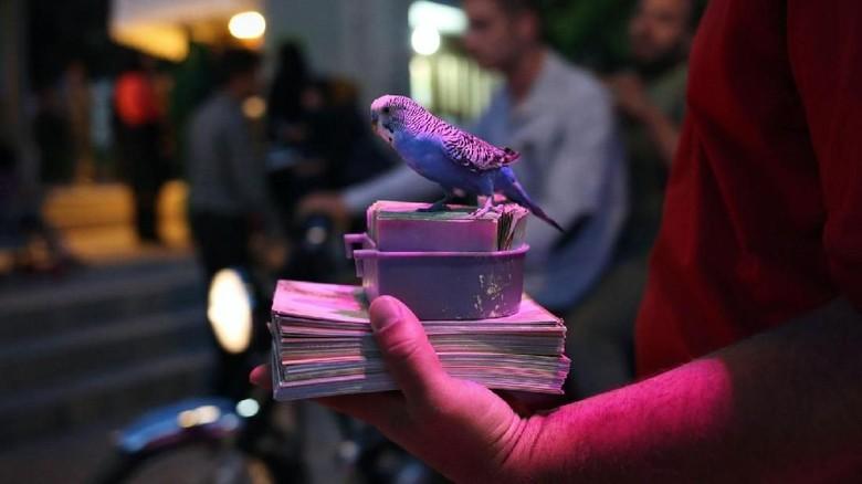 Burung kenari pematuk kertas puisi dalam tradisi Fal-e Hafez Iran (John Moore/Getty Images/BBC Travel)