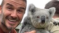 Saat David Beckham Mesra-mesraan dengan Koala