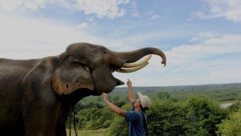 WWF: Keanekaragaman Alam Hilang Besar-besaran karena Konsumsi Manusia