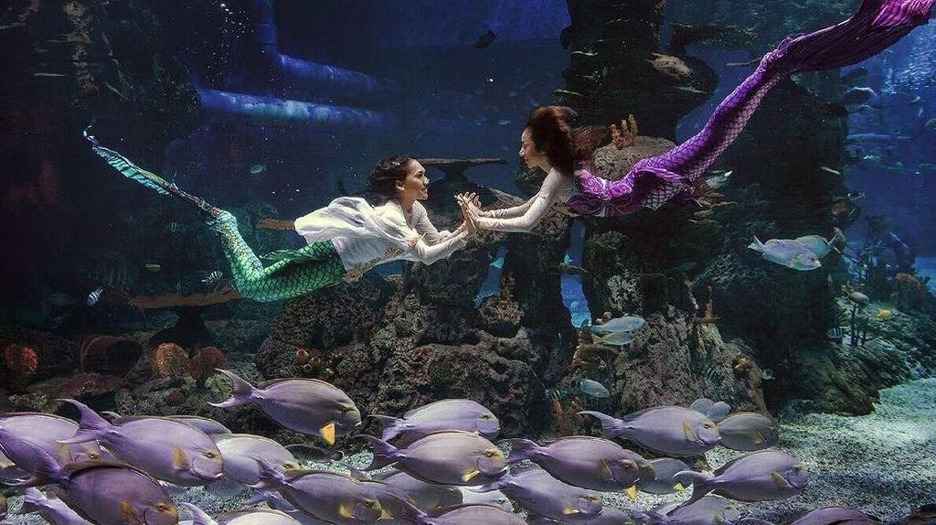 Ada Putri Duyung Berenang Dalam Mal di Jakarta, Mau Lihat?