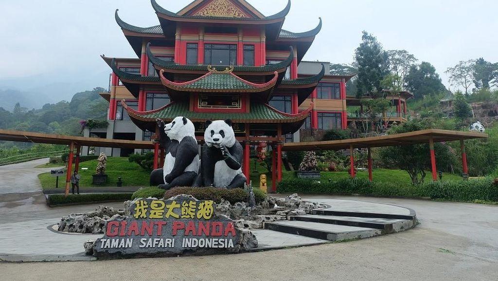 Selain Lihat Panda Lucu, Ini Keseruan Lain di Istana Panda