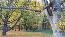 Oh Warsawa, Indahnya Dirimu Saat Musim Gugur
