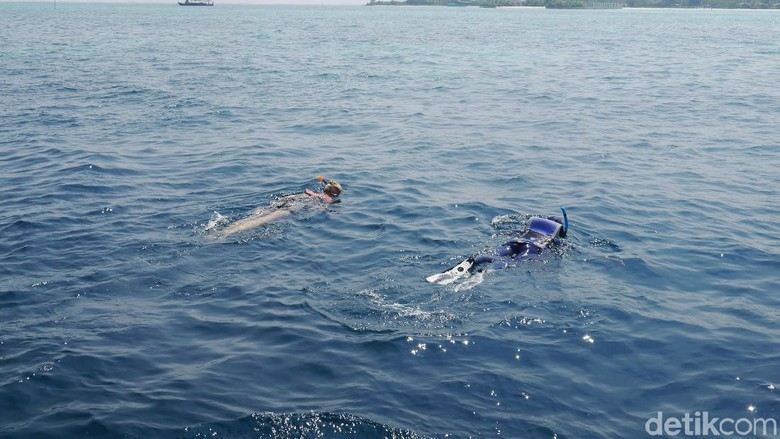 Foto: dTraveler snorkeling di Club Med Maldives (Kurnia/detikTravel)