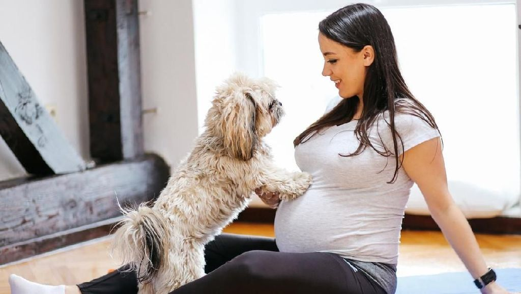 3 Hewan Peliharaan yang Baiknya Dijauhi Ibu Hamil