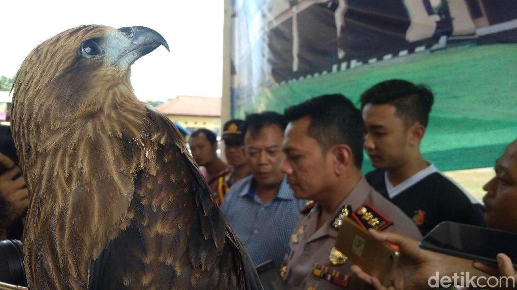 Polres Cirebon Ungkap Perdagangan Satwa Dilindungi Secara Online